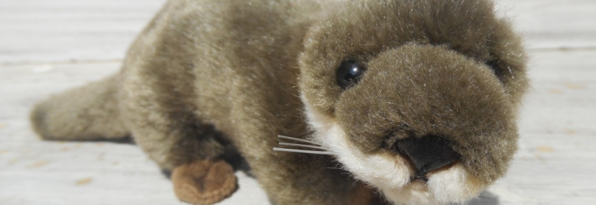 ADOPTER UNE LOUTRE !